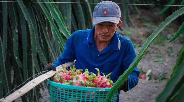 Xuất khẩu thanh long đình trệ, Bộ trưởng Nông nghiệp về địa phương giải cứu - 6