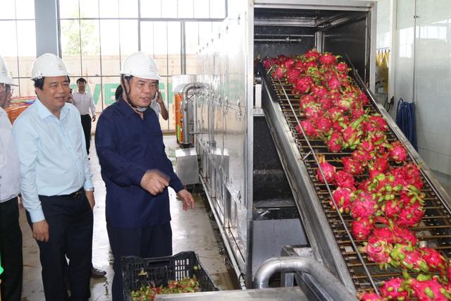 Xuất khẩu thanh long đình trệ, Bộ trưởng Nông nghiệp về địa phương giải cứu - 1