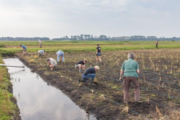 Sử dụng mực nước cao và các cây trồng thích hợp, nhóm nghiên cứu tin sẽ giảm hiện tượng xói mòn đất, cũng như khí thải cacbon.Ảnh: Great Fen.