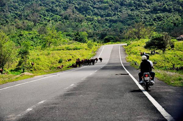 Vi vu trên một chiếc xe máy là cách lý tưởng nhất để trải nghiệm vẻ đẹp nơi đây. Ảnh: Tracy Truong/flickr.com