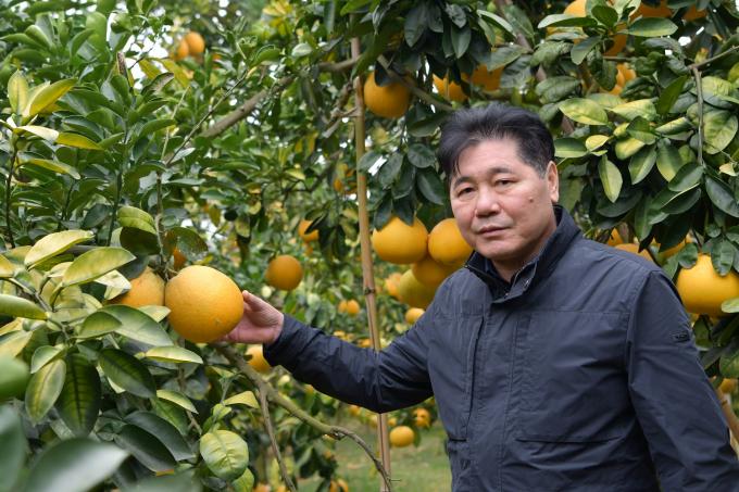 Ông Lê Quốc Thanh trong một lần tham quan mô hình sản xuất bưởi hữu cơ tại Lục Ngạn (Bắc Giang). Ảnh: Lê Bền