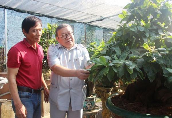 Thu nhạp vài trăm triệu từ trồng mai bonsai